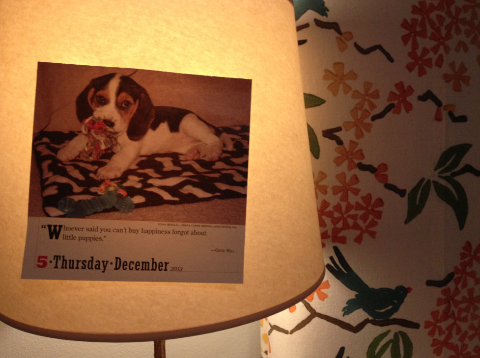 Picture of puppy taped to lampshade