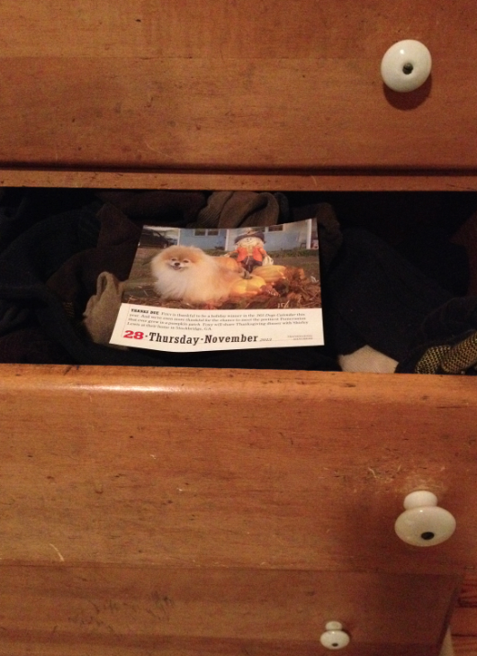 Picture of puppy in dresser